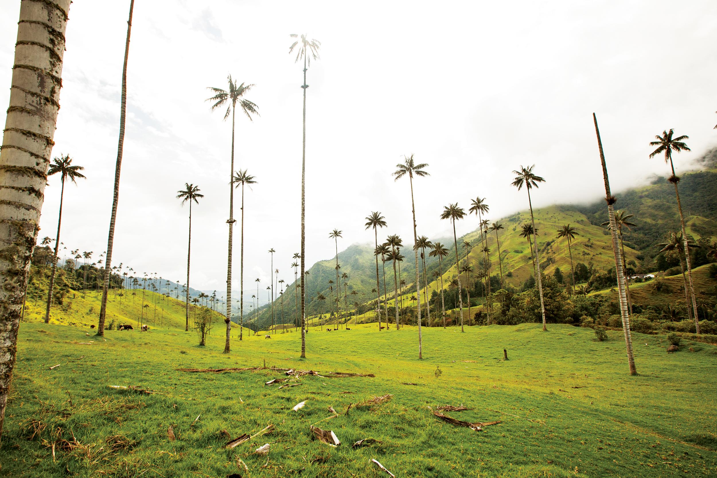 Colombia  Isabel Saldanha14